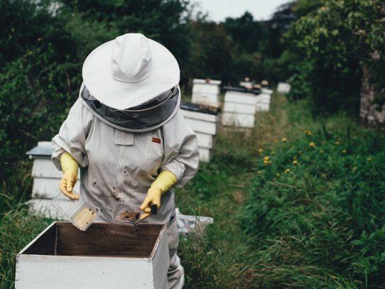 Mit Technik gegen das Bienensterben